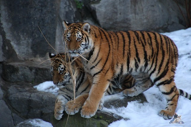 Tierpark Berlin 09.01.2016  0102