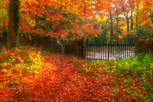 Autumn gate.