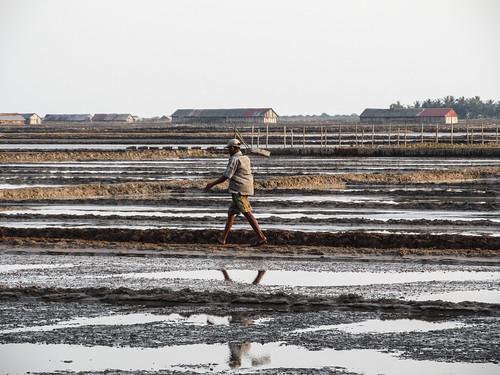 Kampot: les marais salants