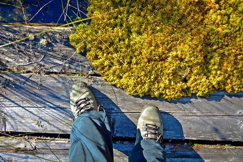 feet nature finland moss shoes view outdoor hiking hikingboots rahkasammal