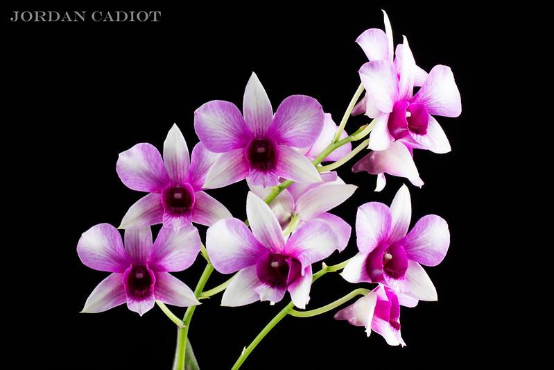Quelques belles ! 24714503612_17ce9432b7_c