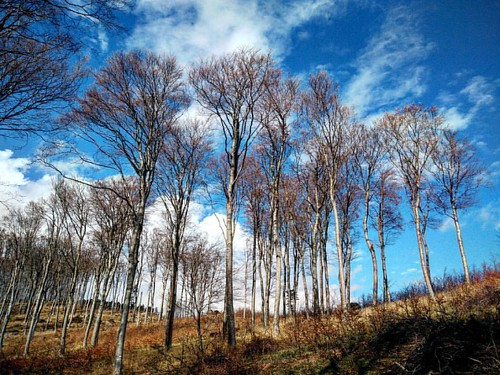 #gasparnorbertpalphotography #hungary_gram #hungary #loves_hungary #instamagyarorszag #ig_hun #ig_hungary #ighungary #tree_captures #tv_trees #pocket_trees #pocket_rural #rural_love #magyarország #fiftyshades_of_nature #tree_captures016 #tree #forest #tre