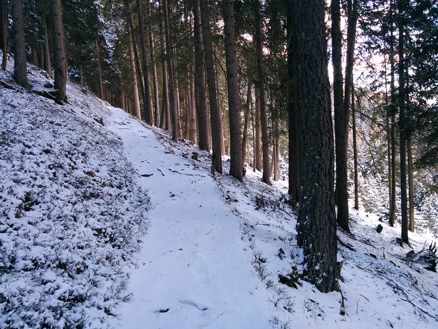 Aufstieg Gönner Alm durch den Wald