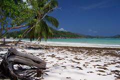 Praslin Island, Seychelles - 100_2402