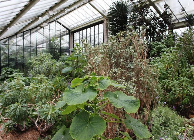 Kew Gardens10