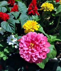 IMG_1522e ~ Flowers