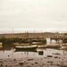 Small photo of Lerwick gulls at effluent of fish freezer