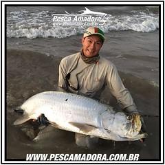 Gerson Kavamoto, especialista em pesca de fly, mostra que no #Brasil também se pesca #tarpon  e grande. Esse foi fisgado na Paraíba.  #pescaamadora #pesqueesolte #baitcast #pescaesportiva #sportfishing #fishing #flyfishing #fish #bassfishing #bass #angler