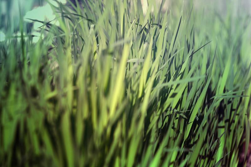 blur-dreamy-texture-texturepalace-3