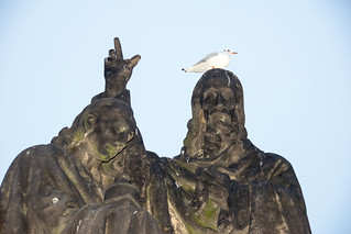 Изображение Карлов мост вблизи Malá Strana. prague praha charlesbridge blackheadedgull karlůvmost chroicocephalusridibundus