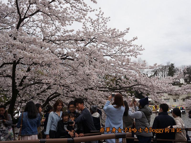 日本東京吉祥寺牛肉丸&satou牛排36