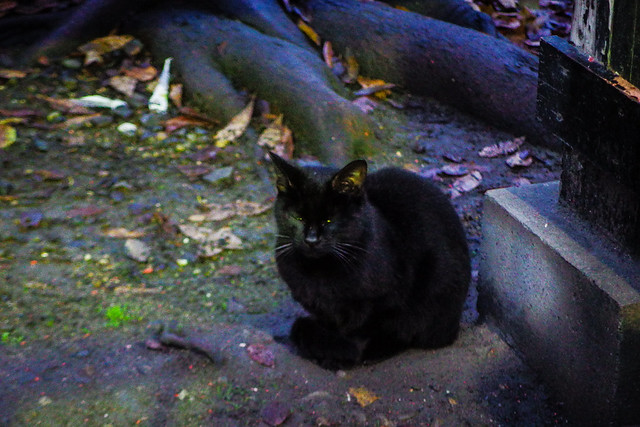 Today's Cat@2015-12-27