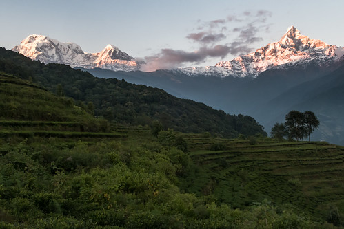 nepal mountains clouds trek landscape tea fields mardi annapurna himal