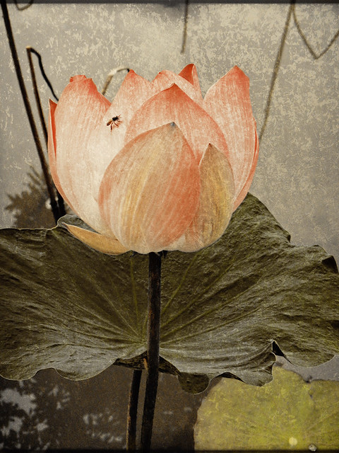 Pink Lotus in Stackables
