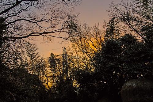 trees japan sunrise dawn pylon powerline kyushu kitakyushu kurosaki gotoyama