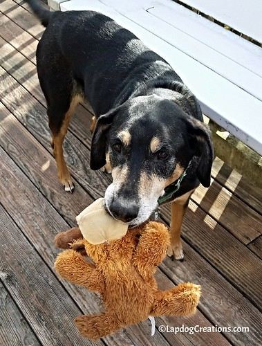 seniordog rescued dog adopt don't shop rescue pet senior Kong dog toy #LapdogCreations ©LapdogCreations
