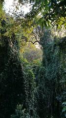 Dunumadalawa Forest