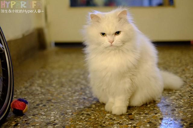 巷子有貓 (17)
