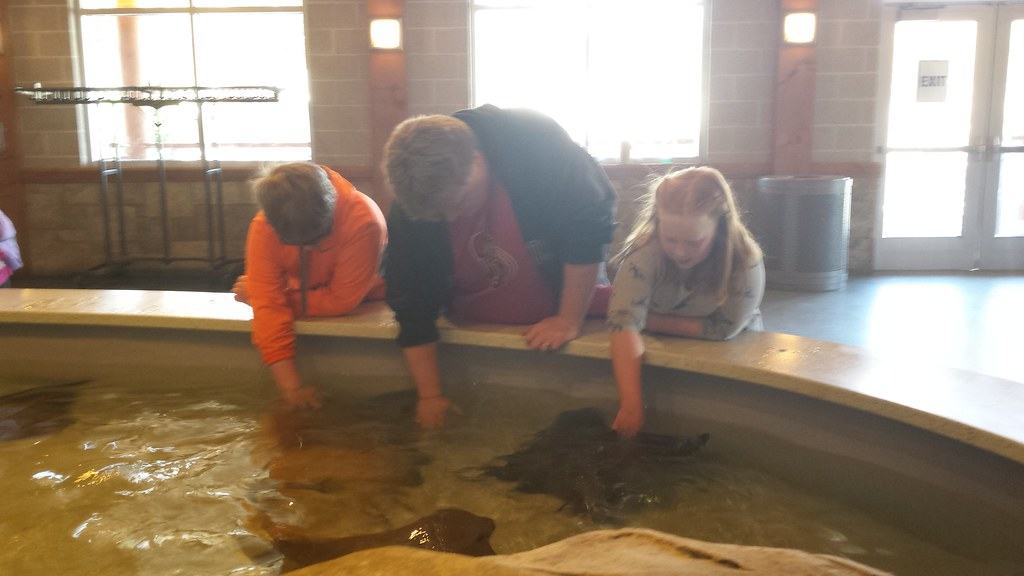 The stingrays were exceptionally friendly. Like water cats