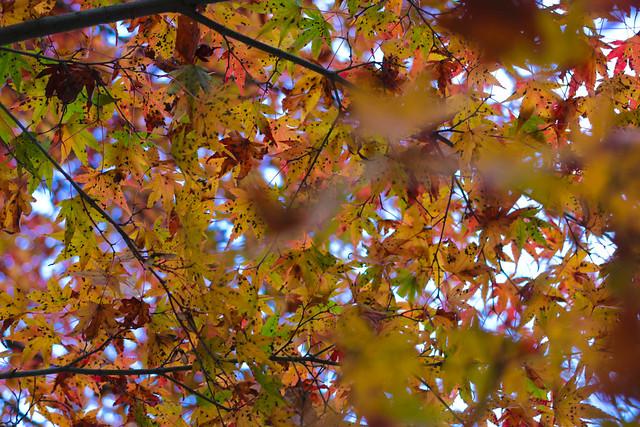 20141122-武奈ヶ岳&京都ライトアップ-0468.jpg
