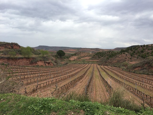 Vineyards outside Najera
