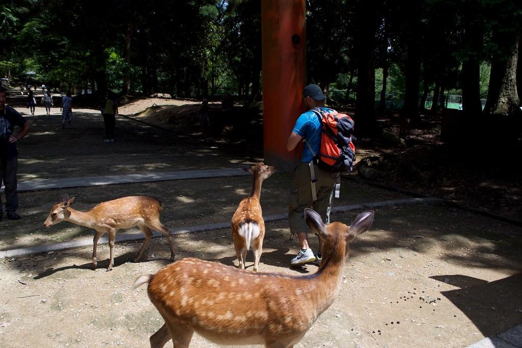 Nara Park_11