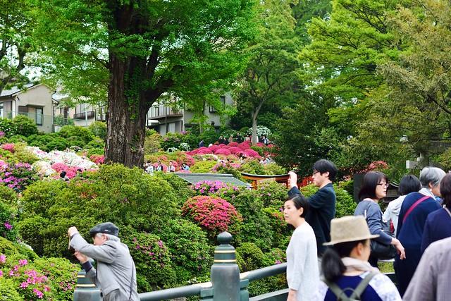 つつじまつりの根津神社