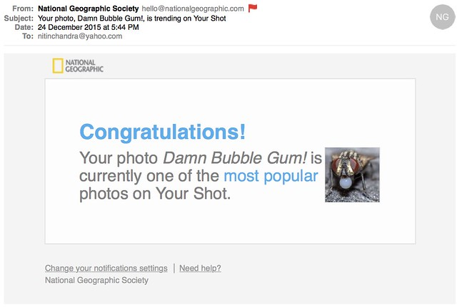 Your photo Damn Bubble Gum is trending on Your Shot