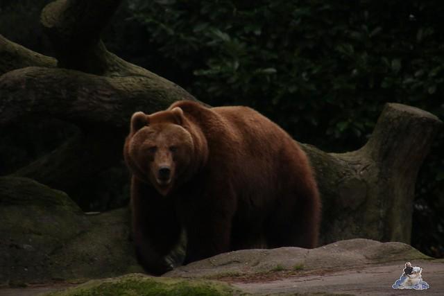 Tierpark Hagenbeck 02.01.2015   23