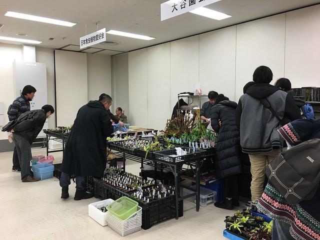 2016/01/07 サンシャインらん展 大谷園芸・日本食虫