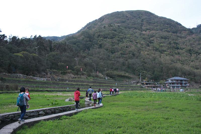 竹子湖採海芋-17度C隨拍 (5)