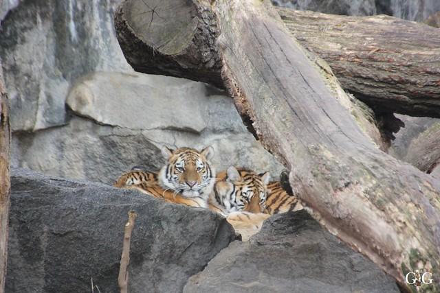 Besuch Tierpark Friedrichsfelde 14.02.201626