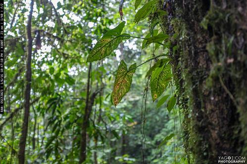 green nature ecuador jungle cloudrainforest