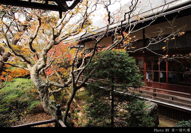 京都-永觀堂101