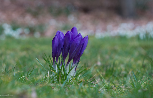 flowers nature spring danmark denmak