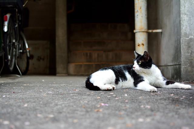 団地でたたずむネコの写真