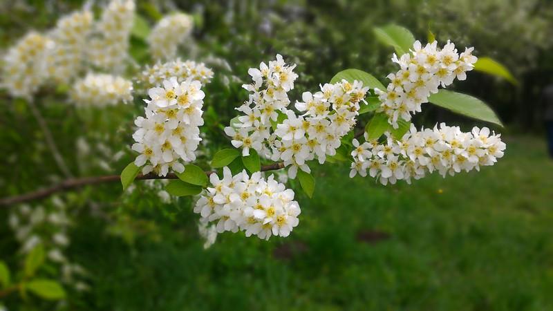 Апрель в Ботаническом саду