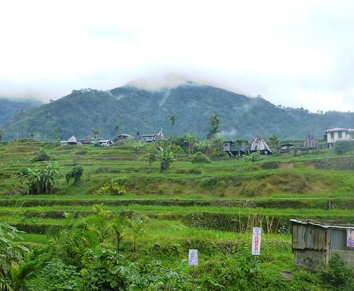 P16-Luzon-Mayoyao-Terrasses (13)