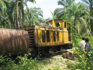 Palmölplantage PT PN II Kebun Sawit Seberang (Sumatra, Indonesien),  Juli 2008