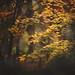 Bringing back Autumn by Tammy Schild