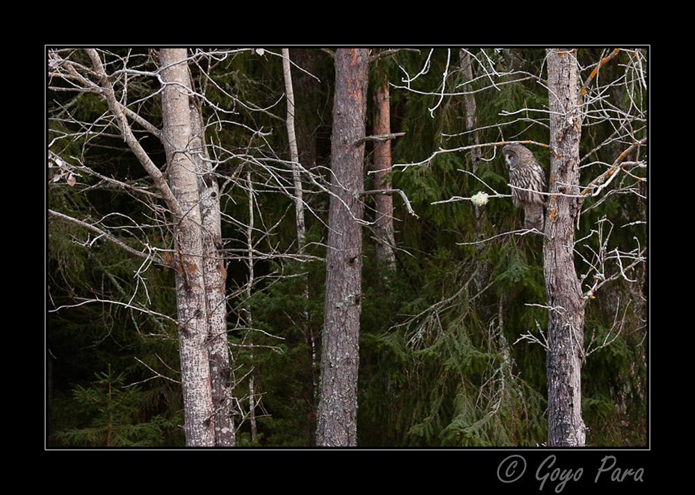 En un claro de bosque