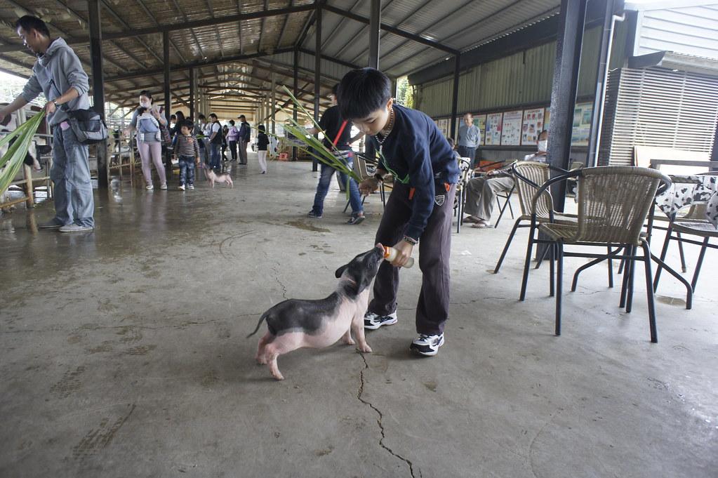 台南市柳營乳牛的家 (54)