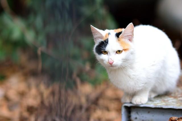錆びた鉄板のうえで上でたたずむネコの写真