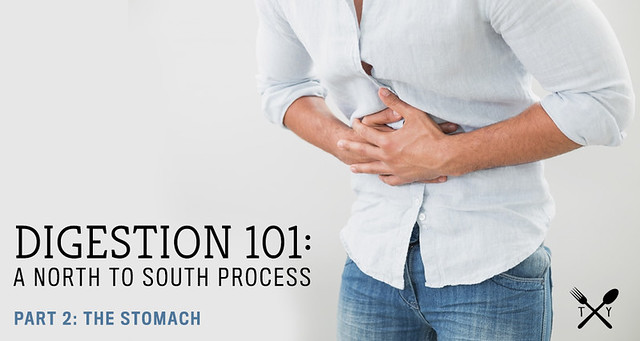 Digestion 101 // Part 2: The Stomach