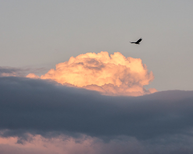 bird and clouds