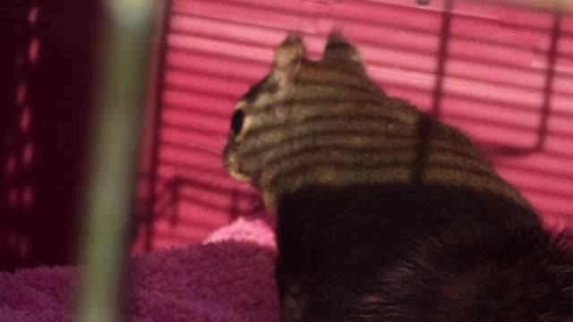 Douglas Squirrel Release 2-25-16