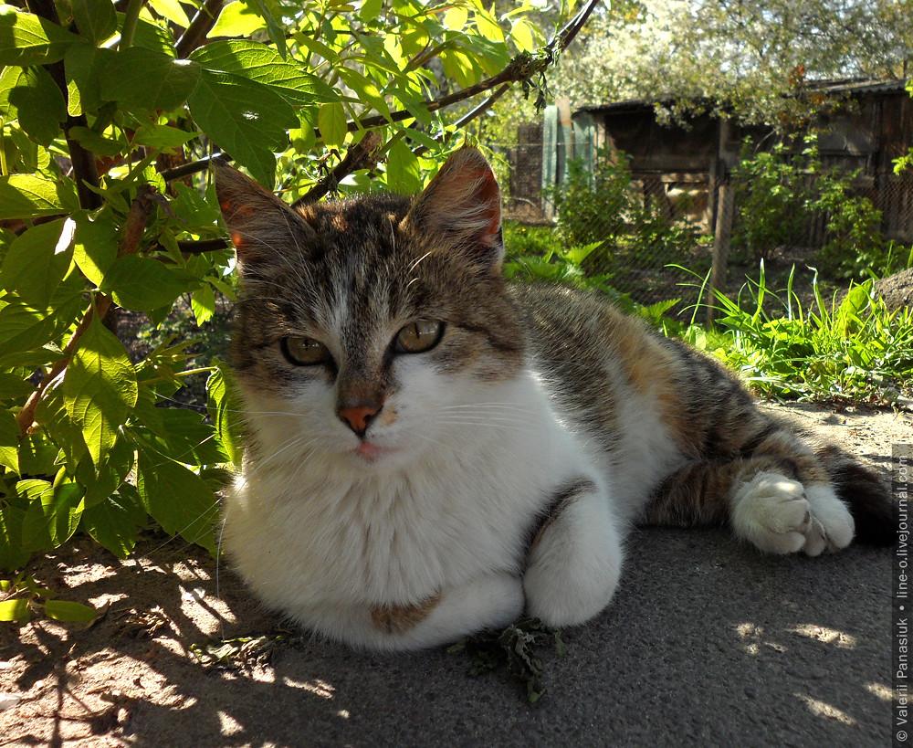 20160421_lutsk_cat_002
