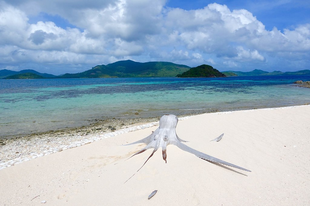 Palawan: Why You Should Visit This Natural Wonder in the