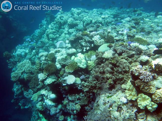 圖6. 大堡礁蜥蜴島周圍的緞帶礁