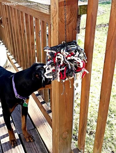 Penny is on bird watch! Make a Bird Nesting Materials Holder - Easy DIY Project #kidscrafts #DIY #wildlife #birds #LapdogCreations ©LapdogCreations